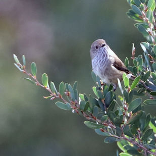 Bird_Branch